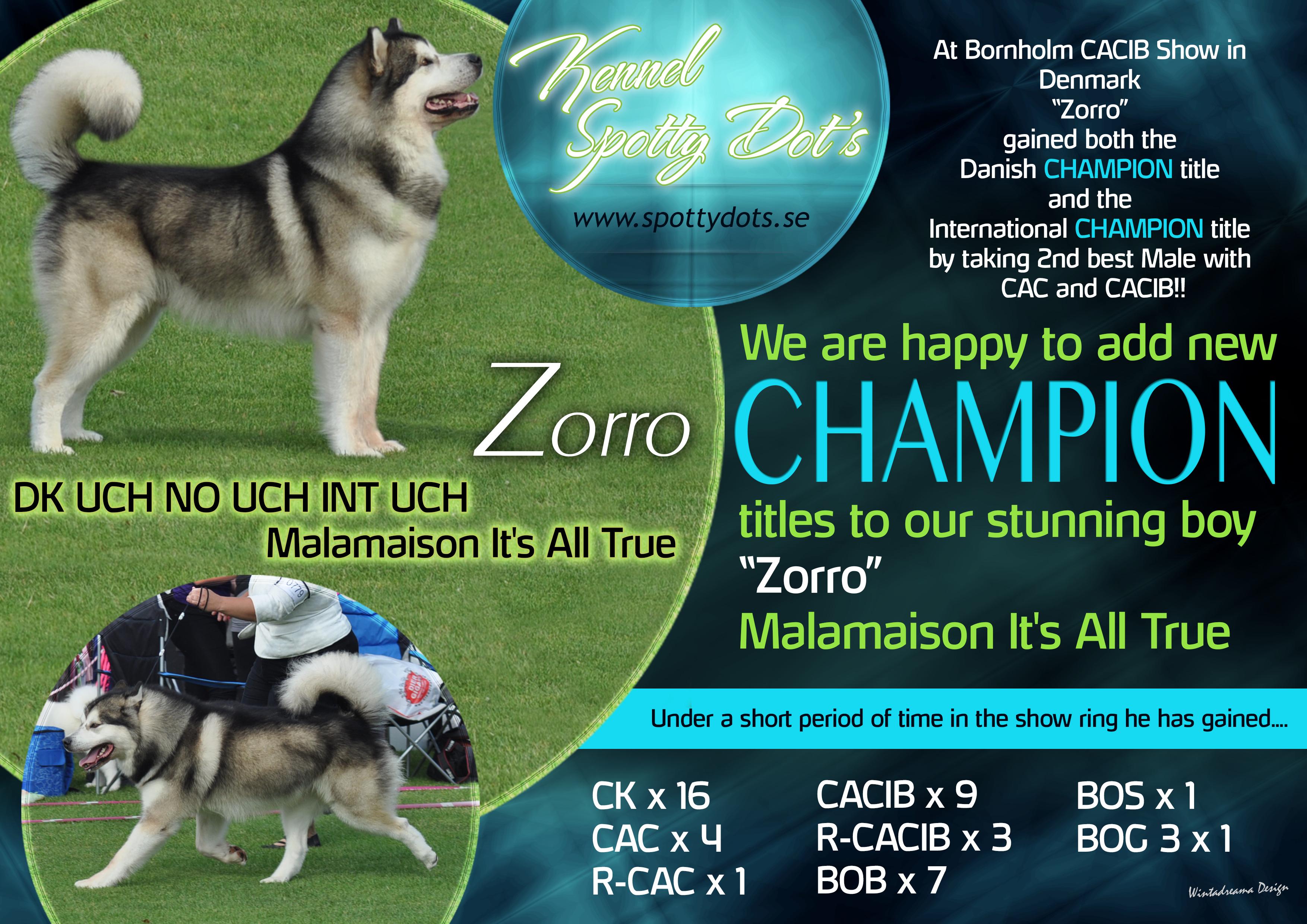 SPOTTY-DOTS-ZORRO-NEW-CHAMPION-2015
