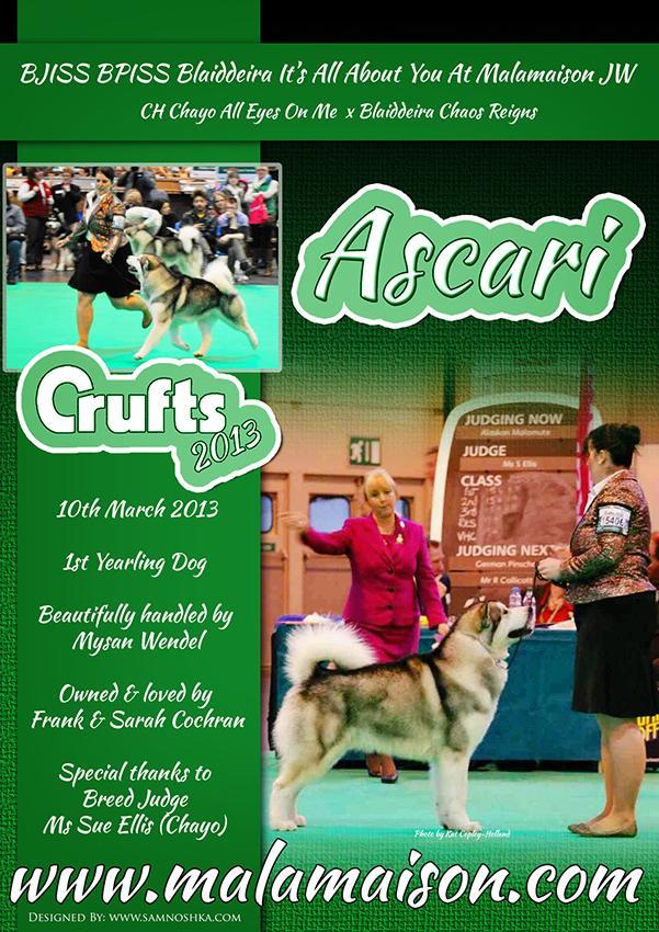 crufts_ascari